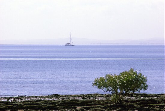 Sailing in the bay by robert murray