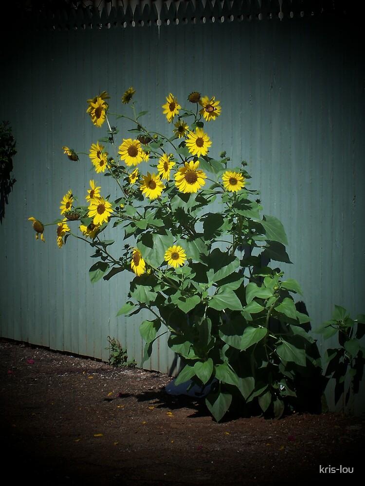 Sunflowers by kris-lou
