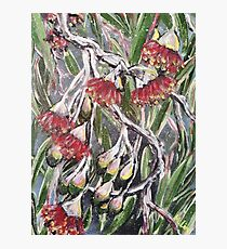 EUCALYPTUS BLOSSOMS by H.Lin Photographic Print