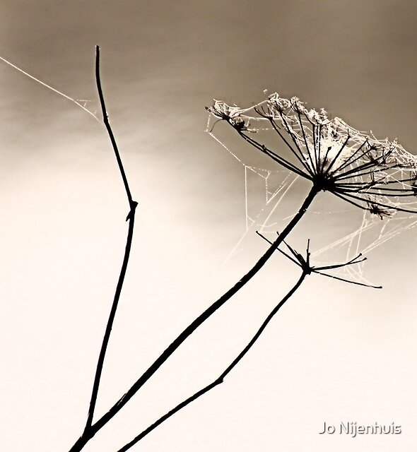 The Art of Nature by Jo Nijenhuis