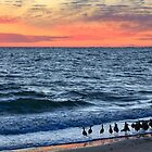 Willets and Sundown Surf by Kenneth Keifer