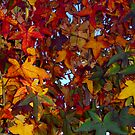 Autumn Leaves by John Brotheridge