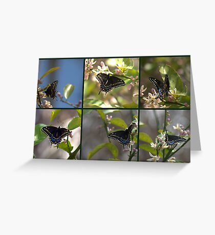 Black Swallowtail Collage Greeting Card