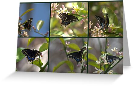 Black Swallowtail Collage by Virginia N. Fred