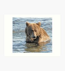 Bear Series # 19 Art Print