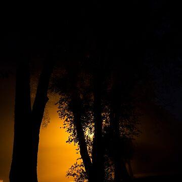 Orange Silhouette by cyrenekrey