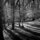 Bull Run Path in Black and White by Cecilia Carr
