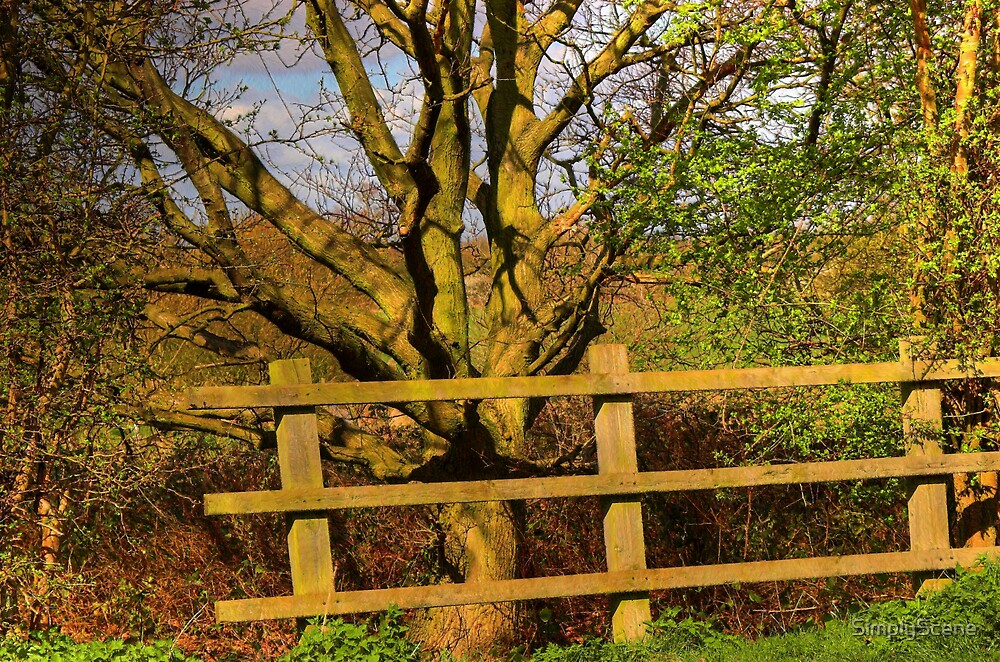 Fence and Tree by SimplyScene