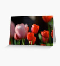 DC Tulips  Greeting Card