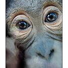 Monkey  by MarkYoung