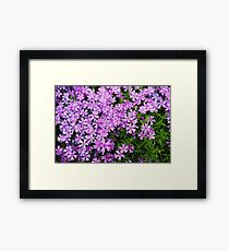 Fairy Foxglove Purple Flowers  Framed Print