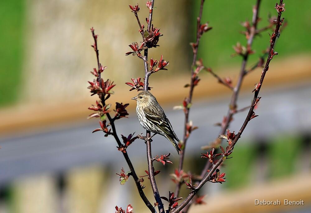 Visitor On Spring Foliage by Deborah  Benoit
