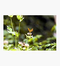 Lightness - Austria Photographic Print