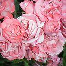 roses by RainCloud
