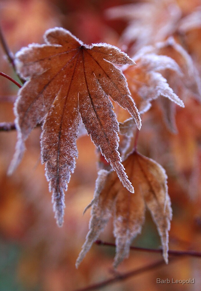 Frosted Maple Leaf by Barb Leopold