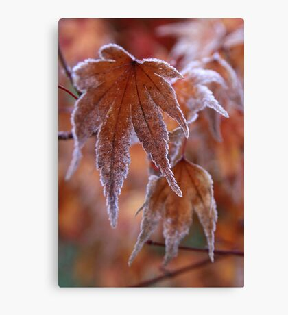 Frosted Maple Leaf Canvas Print