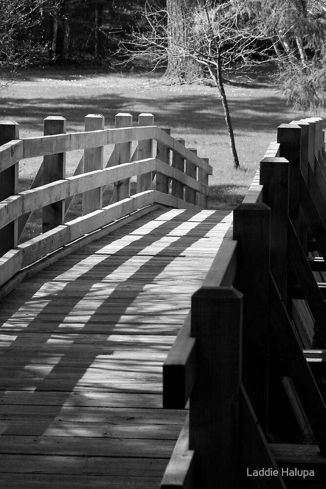 Homeward Bound. by Laddie Halupa