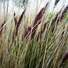 Soft Grasses by Tama Blough