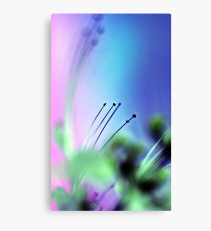 Cats Whiskers. Canvas Print