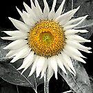 Oh Solar Mio by sundawg7
