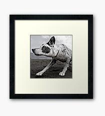 Friend or Foe? Framed Print