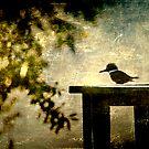 Kingfisher by Jonicool