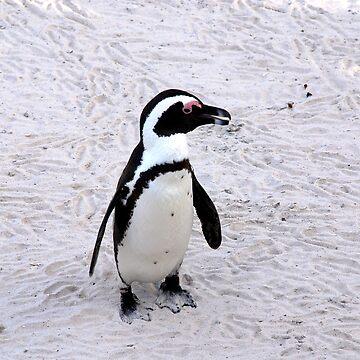 Safari - Penguin by rabeeker