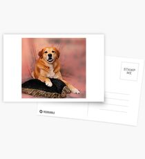 Picture Perfect Pose Postcards