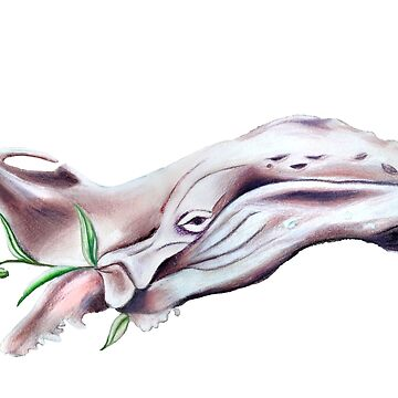 Whale by HZSjostrom