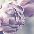 Soft Macro Purple Tulips by gingerfancy
