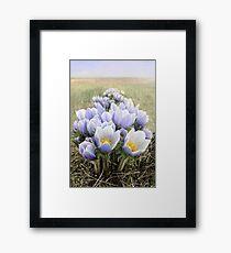 Prairie Crocus Photo Framed Print