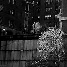 UN Plaza Watch by Judith Oppenheimer