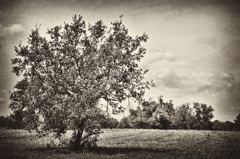 The Giving Tree by Jonathan Garrett
