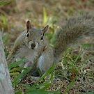 Are You Nuts? by Margaret  Shark