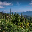 Lets go Walking - Oregon Cascades by Charles & Patricia   Harkins ~ Picture Oregon