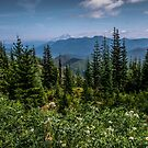 Lets go Walking #2 - Oregon Cascades by Charles & Patricia   Harkins ~ Picture Oregon