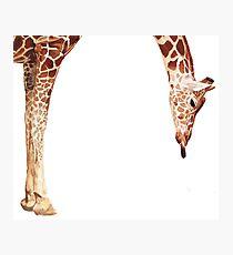 """Licker"" Giraffe Wildlife Animal Watercolor Photographic Print"