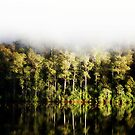 Fog and Reflections by cjcphotography
