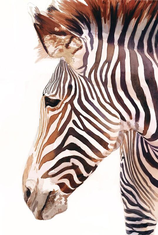 Quot Quot Zebra Bust Quot Zebra Wildlife Watercolor Quot By Paul Jackson