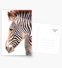 """Zebra Bust"" Zebra Wildlife Watercolor Postcards"
