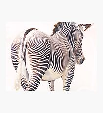 """Wrong Way"" Zebra Wildlife Watercolor Photographic Print"