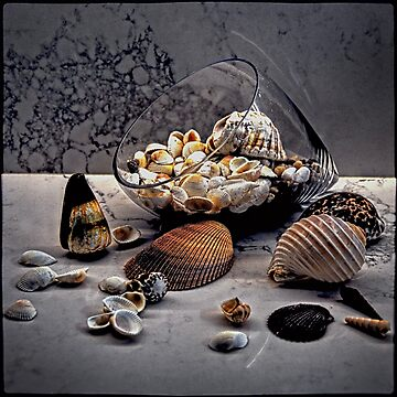 Still life with shells by andreisky