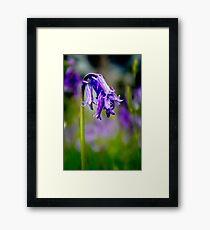 Bluebell Framed Print