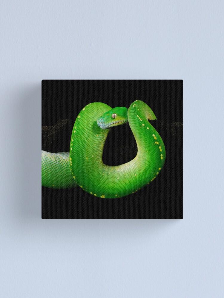 Alternate view of Green Tree Python [Morelia viridis] Canvas Print
