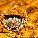 Mercury Eyes by Greg Hughes