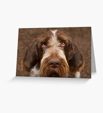 Brown Roan Italian Spinone Dog Head Shot Greeting Card