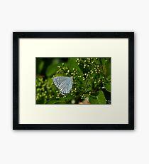 Blue/Grey Framed Print