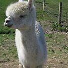 Llama Love by lovebitten