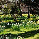 A spring walk by Kimberley Davitt