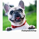Adopt Don't Shop by SupportiveSols